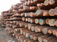 BS standard wooden poles stacked and ready for export