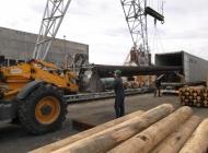 12m stout wooden poles