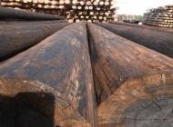 wooden telegraph poles